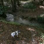 Dog walking Tenterden