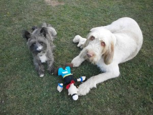 Home boarding Tenterden & Home Boarding - Barking Mad About AnimalsBarking Mad About Animals