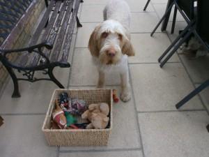 Home boarding Tenterden & Home boarding- Evie - Barking Mad About AnimalsBarking Mad About Animals