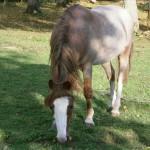 Equine care Tenterden