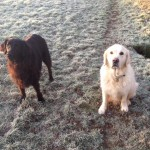 Dog walking Biddenden