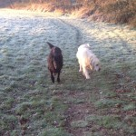 Dog walking Biddenden