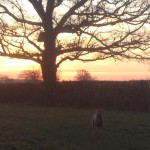 Dog walking Tenterden